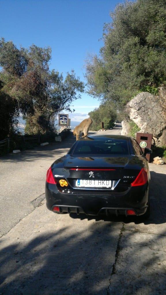 Costa del Sol - Gibraltar - Apina