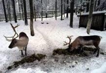 Jokamies-Teslalla-talvella-Nordkappiin-Porot